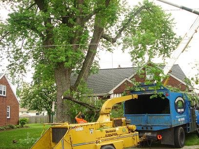 The Dangers of DIY Tree Cutting - Tree Cutting Quotes