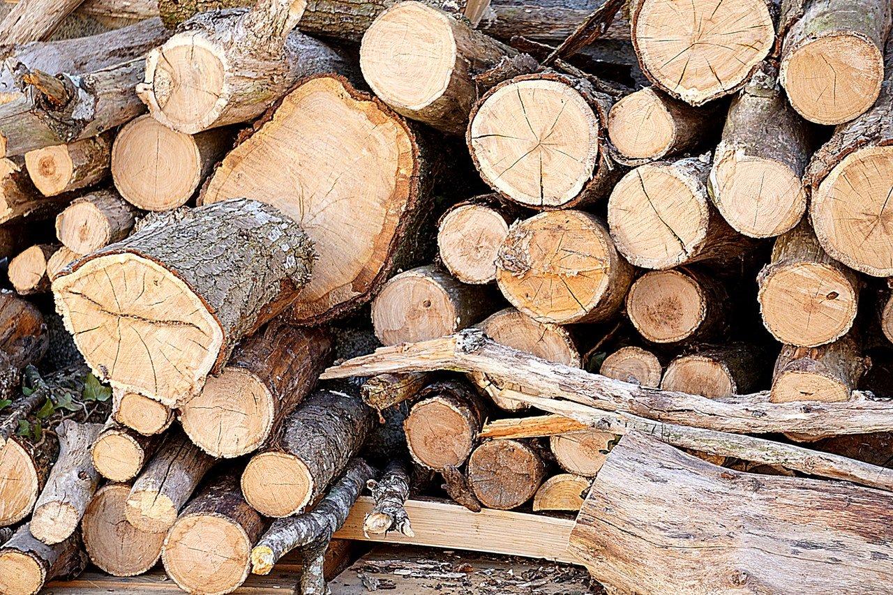 Avoiding Tree Service Scams