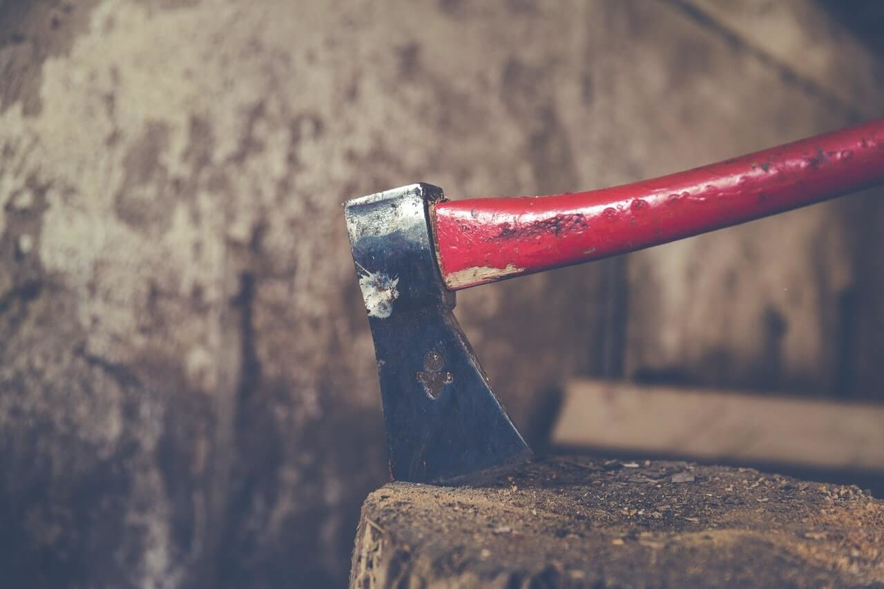 Questions to Ask When Hiring a Tree Cutting Service