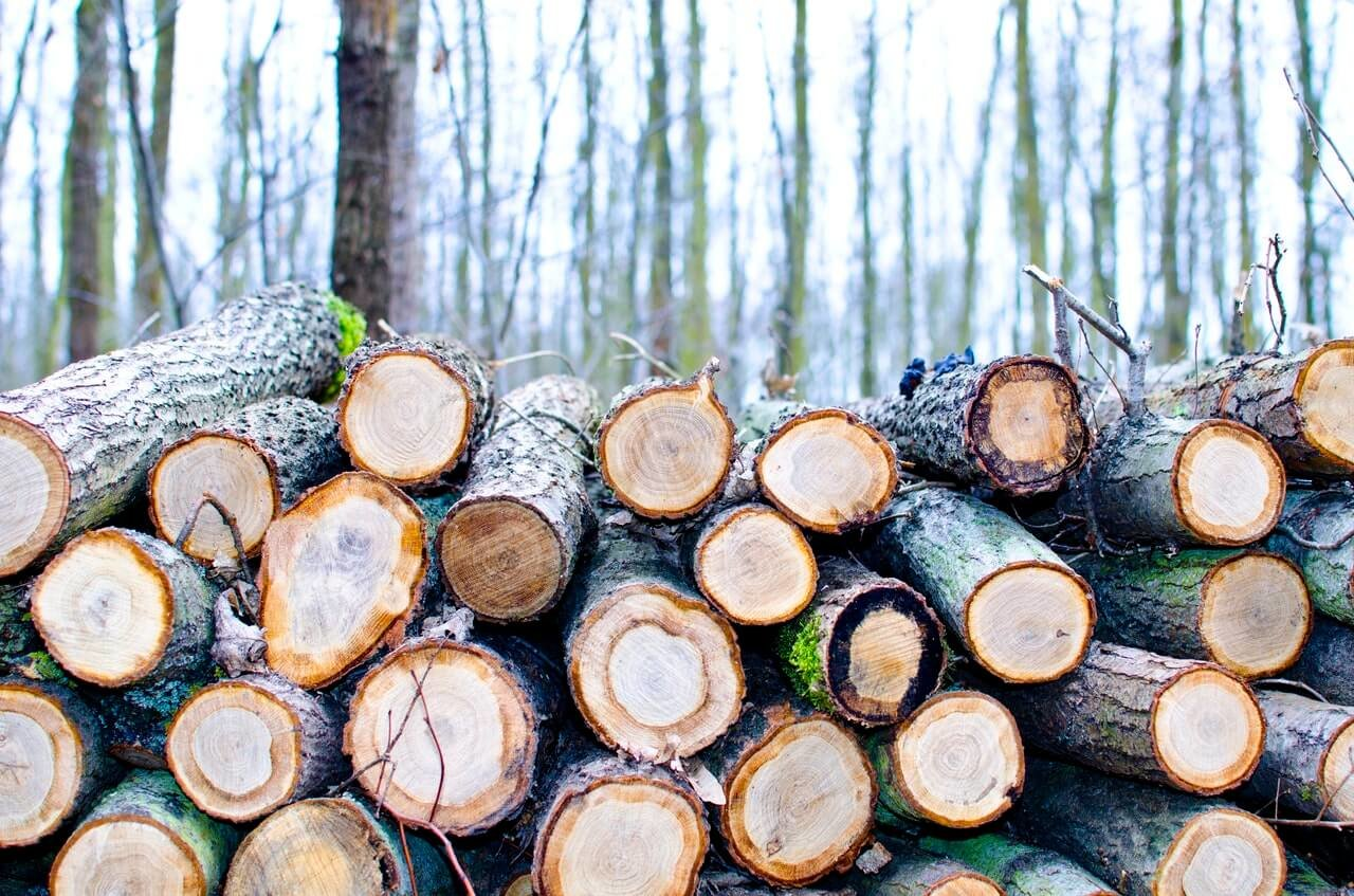 How to get a tree cut down for free tree cutting quotes the dangers of diy tree cutting solutioingenieria Gallery